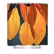 Golden Leaves With Golden Sunshine Shining Through Them Shower Curtain