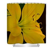 Golden Lily Glow Shower Curtain