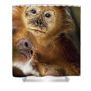 Golden Lion Tamarin Mother And Baby Shower Curtain