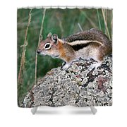 Golden Mantled Ground Squirrel Shower Curtain