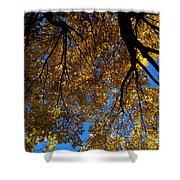 Golden Maple 8 Shower Curtain