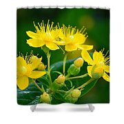 Golden Miracles Shower Curtain