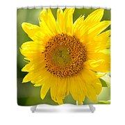 Golden Moment - Sunflower Shower Curtain