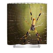 Golden Orb Weaver Shower Curtain