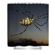 Golden Orb Web Spider Shower Curtain