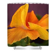 Golden Pansy Shower Curtain