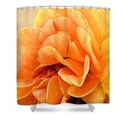 Golden Peach Rose Shower Curtain