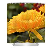 Golden Petals Shower Curtain