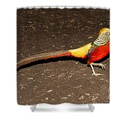 Golden Pheasant Male Shower Curtain