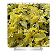 Golden Poinsettias Shower Curtain