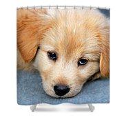Retriever Puppy Shower Curtain