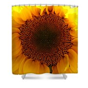 Golden Ratio Sunflower Shower Curtain by Kerri Mortenson