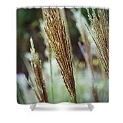 Golden Reeds Shower Curtain