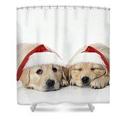 Golden Reriever Puppies, 7 Weeks Old Shower Curtain