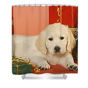 Golden Retriever Amongst Presents Shower Curtain