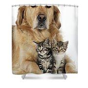 Golden Retriever And Kittens Shower Curtain