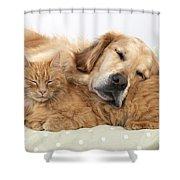 Golden Retriever And Orange Cat Shower Curtain