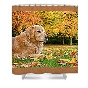 Golden Retriever Dog Autumn Day Shower Curtain
