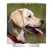 Golden Retriever Dog Shower Curtain