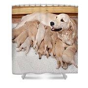 Golden Retriever Dog, Litter Suckling Shower Curtain