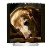 Golden Retriever Dog Sleeping In The Morning Light  Shower Curtain by Jennie Marie Schell