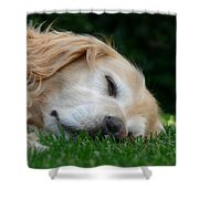 Golden Retriever Dog Sweet Dreams Shower Curtain