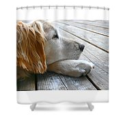 Golden Retriever Dog Waiting Shower Curtain