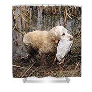 Golden Retriever Dog With Mallard Duck Shower Curtain