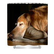 Golden Retriever Dog With Master's Slipper Shower Curtain by Jennie Marie Schell