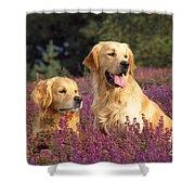 Golden Retriever Dogs In Heather Shower Curtain