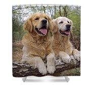 Golden Retriever Dogs Shower Curtain