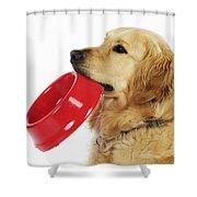 Golden Retriever Holding Bowl Shower Curtain