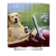 Golden Retriever In Car Shower Curtain