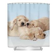 Golden Retriever Puppies Asleep Shower Curtain