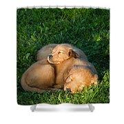 Golden Retriever Puppies Sleeping Shower Curtain by Linda Freshwaters Arndt