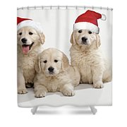 Golden Retriever Puppies With Christmas Shower Curtain