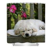 Golden Retriever Puppy Sleeping Shower Curtain