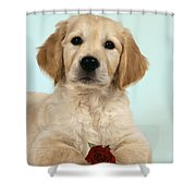 Golden Retriever Puppy With Rose Shower Curtain
