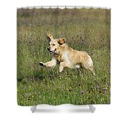Golden Retriever Running Shower Curtain