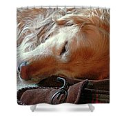 Golden Retriever Sleeping With Dad's Slippers Shower Curtain by Jennie Marie Schell