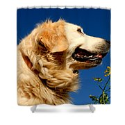 Golden Retriever Shower Curtain