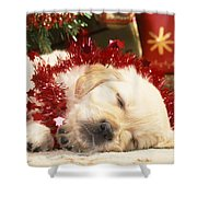 Golden Retriever Under Christmas Tree Shower Curtain