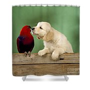 Golden Retriever With Grand Eclectus Shower Curtain