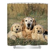 Golden Retriever With Puppies Shower Curtain