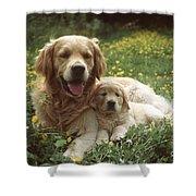 Golden Retrievers Dog And Puppy Shower Curtain