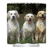 Golden Retrievers Shower Curtain