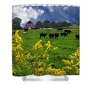 Golden Rod Black Angus Cattle  Shower Curtain