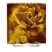 Golden Yellow Roses Shower Curtain