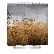 Golden Shades Of Winter Shower Curtain