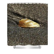 Golden Shell Shower Curtain